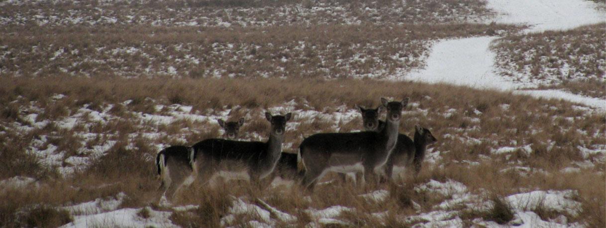 Royal Danish Deer Park photo by Chin tin tin